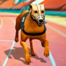 Real Dog Racing Simulator